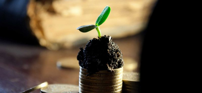 A plant growing out of coins